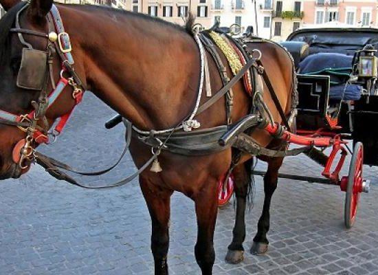 17-cavallo--carrozza--vetturino